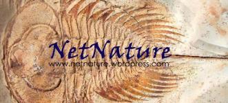 Netnature