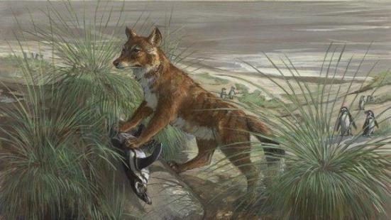 Pintura mostra o lobo das Malvinas, único mamífero nativo das Ilhas Malvinas, extinto por caçadores em 1876 (Michael Rothman, Ace Coinage Inc)