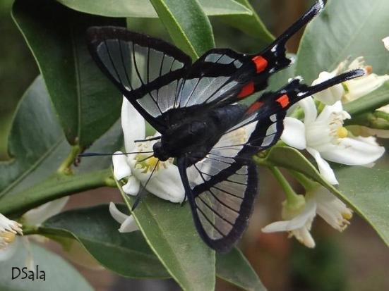 Por: Borboletas e mariposas