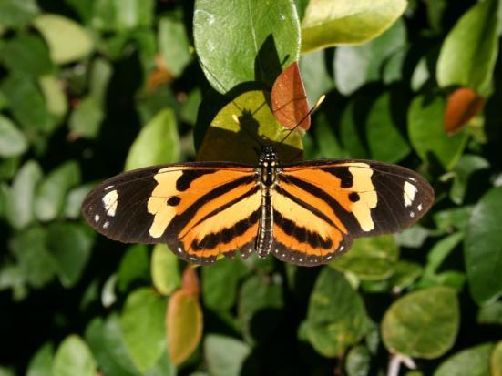 Por: Fauna Paraguay