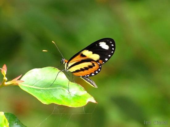 Por: borboletaskmariposas.blogspot.com.br