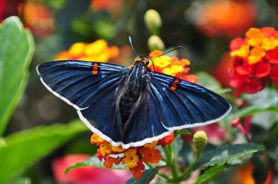 Por: Mexican Butterflies