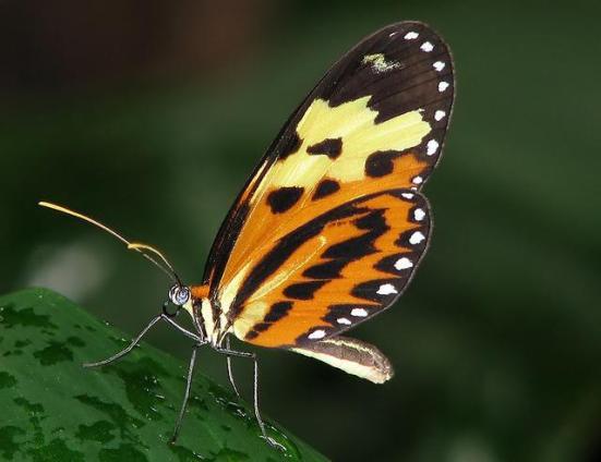 Por: borboletaskmariposas