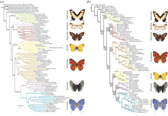 Filogenias possiveis para Papilionoidea
