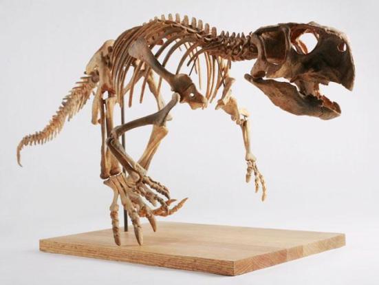 Ossos de  psitacossauro lançado na coleção permanente do Museu das Crianças de Indianápolis. (Crédito: Foto por Michelle Pemberton, via Wikimedia Commons (licença Creative Commons