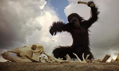 """A cena do """"macaco assassino"""" no filme de Stanley Kubrick, 2001; Uma Odisséia no Espaço (1968), não tem base em fatos."""