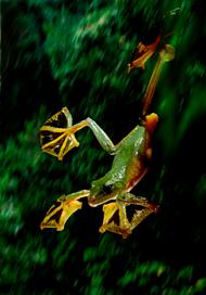 ra-voadora 2