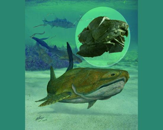 O estudo de fósseis de uma nova espécie de peixe, denominada 'Entelognathus primordialis', trouxe novas informações para o entendimento da evolução do grupo. (imagem Brian Choo)