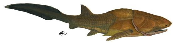 Reconstrução de 'Entelognathus primordialis', peixe que viveu há 419 milhões de anos, durante o período Siluriano. (imagem; Brian Choo)