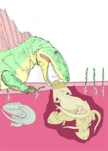 An illustration of Dimetrodon extracting an unfortunate boomerang-head amphibian from its burrow. Shed teeth mingled with amphibian bones reveal that the fin-back ate these strange burrowing creatures in the Permian period.