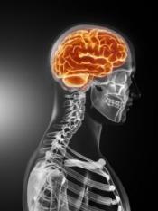 Gene and brain