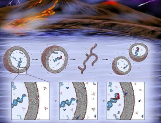 Imagem mostra como teria sido o ciclo da protocélula com síntese de RNA e replicação da célula nos primórdios da Terra