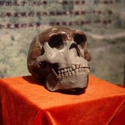 Uma réplica do crânio de Homem de Pequim apresentada no Museu Paleozoological da China, em fevereiro de 2009.