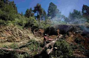A man cuts down an infested tree in the monarch butterfly reserve near Ocampo, Mexico. (Gregory Bull / AP)