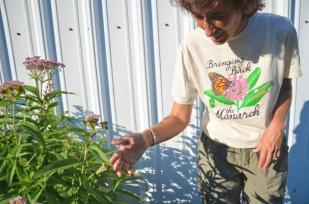 ( Lisa Bolton / The Washington Post ) - At the monarch butterfly way station in Morven Park, Nicole Hamilton is happy to find that a monarch butterfly has laid an egg and that the caterpillar is healthy and strong.