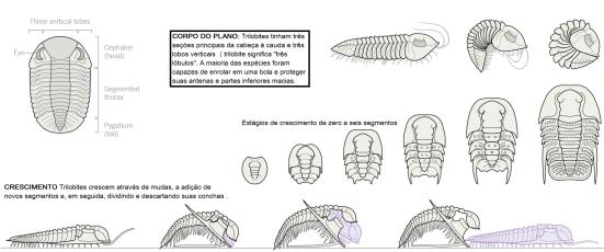 trilobitas 1
