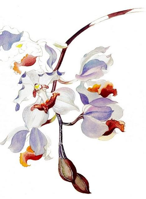 As aquarelas da artista retratam a beleza das flores (Foto; Margaret Mee, Divulgação)