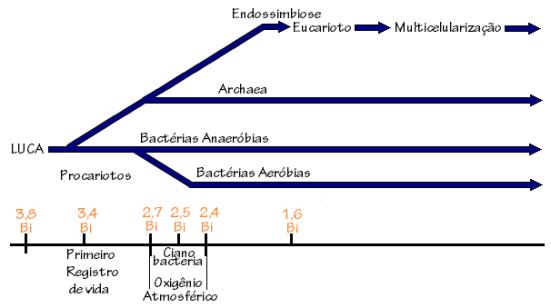 mapa de conceitos - Copia (2)