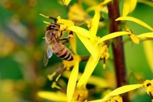 A polinização pelas abelhas é essencial tanto do ponto de vista ecológico como econômico