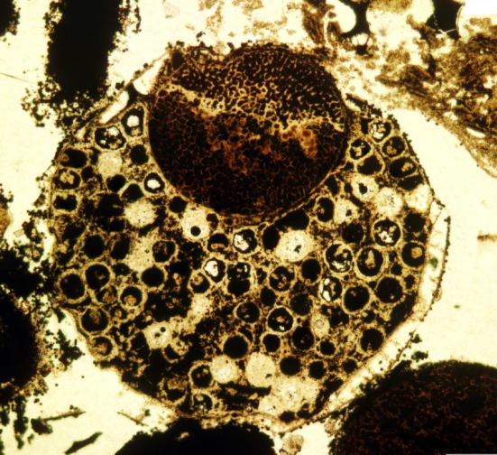 Um espécime multicelulares com um grande matryoshka, que é uma estrutura crescente elipsoidal Dentro da amostra. Espécime de cerca de 0,7 mm de diâmetro. Crédito: Lei Chen Xiao e Shuhai
