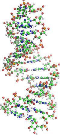 A vida começou com o DNA? Wikimedia Commons