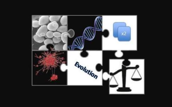 Este é um gráfico de informação do processo de duplicação de genes, que mostra como os genes da irmã pode conferir robustez mutacional permitindo que os organismos para se adaptar a ambientes novos.  Crédito: Fares Mario, 2014