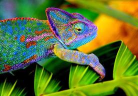 Padrão de coloração característico determinado pela presença de cromatóforos, celulas com tegumentos citoplasmáticos que permitem modulação das cores.