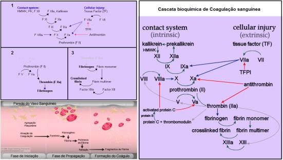 coagulação sangue