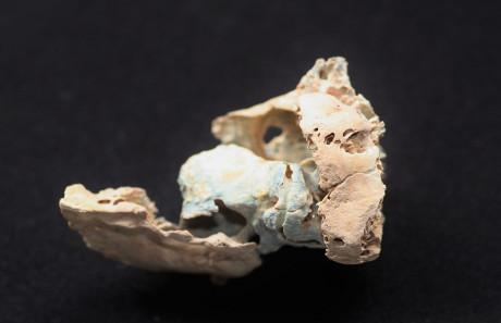 Um dos fragmentos de ossos utilizados no estudo (Cortesia Kendra Sirak / Universidade Emory)]