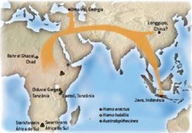 O êxodo africano começou tão logo o H. erectus se desenvolveu, por volta de 1,8 milhão de anos, em parte, provavelmente, porque ele precisava de um espaço maior que seus predecessores de menor porte.