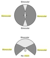 Espectro visual da visão binocular e monocular