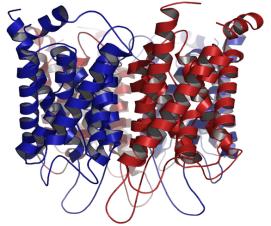 Estrutura cristalográfica da aquaporina 1 (AQP1)