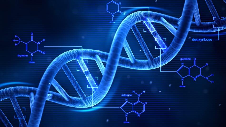 Resultado de imagem para imagem para cadeia de DNA