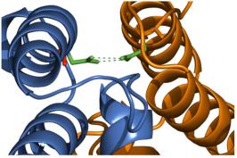 TimB pode ser convertido para funcionar na importação da proteína mitocondrial. Modelo de PbTimB-A139N (azul) ligação a Tim16 (laranja) com base na interacção Tim14-Tim16 publicado (2GUZ). Em Tim14, o resíduo de asparagina (verde) forma um par de ligações de hidrogênio com uma asparagina em Tim16. Em CcTimB e PbTimB, o resíduo nativo nesta posição é uma alanina (vermelho).