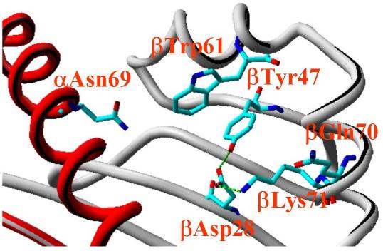 HLA-DR4 é uma proteína produzida pelo homem (cromossomo 6) que tem um mímico molecular com proteínas produzidas por Proteus mirabilis [1]