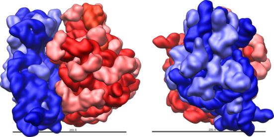 Grande (vermelho) e pequeno (azul) subunidade se encaixam. Estrutura e forma do ribossoma 70S de E. coli. Os grandes subunidade 50S do ribossoma (vermelho) e pequenas 30S subunidade ribossômica (azul) são mostrados com um 200 �gstrom (20 nm) barra de escala. Para a subunidade 50S, 23S (vermelho escuro) e 5S (vermelho alaranjado) rRNAs e as proteínas ribossomais (rosa) são mostrados. Para a subunidade 30S, 16S rRNA os (azul escuro) e as proteínas ribossomais (azul claro) são mostrados. Crédito: por Vossman (Obra do próprio) [CC BY-SA 3.0 ou GFDL], via Wikimedia Commons