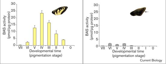 Atividades BAS no tipo selvagem contra forewings melânicas em momentos de desenvolvimento diferentes (estádios de asa pigmentação). Note-se que, em (e) as asas do tipo selvagem, atividade BAS culminado em estágio de desenvolvimento IV, ao passo que, (f) em asas melânicas, atividade BAS era quase ausente. A actividade residual em (f) é derivada apenas de formação dos restantes pontos marginais amarelo (seta).