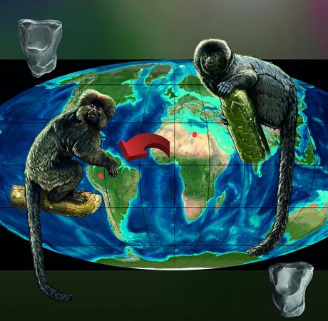 Representação esquemática da estreita relação estabelecida com a análise anatômica dos molares, entre Perupithecus (à esquerda) descoberto no Peru e Thalapitecus (à direita) descobriu na Líbia (Cortesia Ron Blakey)