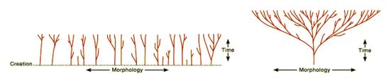 Para a Baraminologia todos os grupos biologicos evoluíram nas espécies atuais após o diluvio. Ou seja, em aproximadamente quatro mil anos todas as espécies surgiram de ancestrais sem quaisquer relacionamentos. Para a evolução a evolução ocorreu em uma escala de tempo geologicamente maior, em bilhoes de anos e todos os ramos da vida estão conectados. O modelo evolutivo tem em seu favor eviencias moleculares geneticas, anamotcas, comportamentais, fosseis e embriológicas
