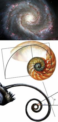A galáxia, um escudo do nautilus, e a tromba parcialmente desenroladas de uma borboleta roxa vermelho-manchado (Limenitis arthemis Astyanax).