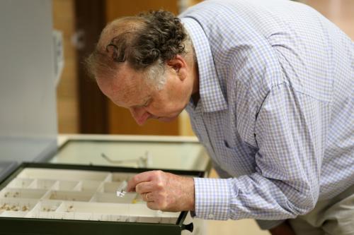 Dr Ted Edwards e a coleção de insetos da CSIRO's Australian National