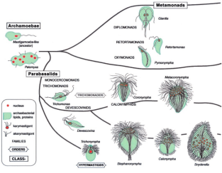 Filogenia de eucariotas quiméricos que podem ser primitivamente a-mitocondriadas.