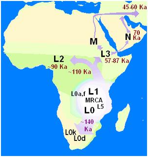 Haplogrupo Modern seres humanos diversificação precoce. Tempo possível de origem 99.000 - 234.000. Mitocondrial macro-haplogroups L0, L1 e L5