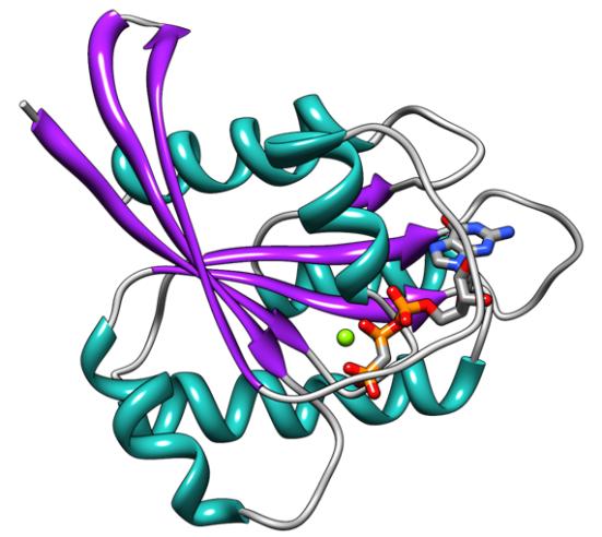 A estrutura PDB 121p da proteina H-Ras (fitas roxas), hélices em azul e loops em cinza. Também são mostrados os análogos de GTP e de íons de magnésio.