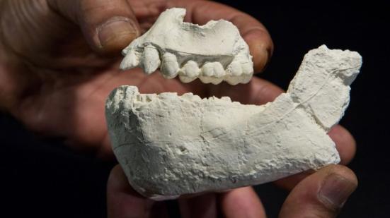 """Estes jawbones datado de 3.5 a 3.3 milhões de anos atrás pode pertencer a um primo do famoso Australopithecus """"Lucy""""."""