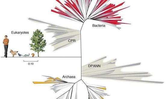 Os novos grupos de bactérias (CPR) expandir o filos conhecido e caracterizado (superior). Estes e relatado anteriormente novos grupos de Archaea (DSPANN) mostram que a Árvore da Vida é simplista. Crédito: gráfico grupo Banfield