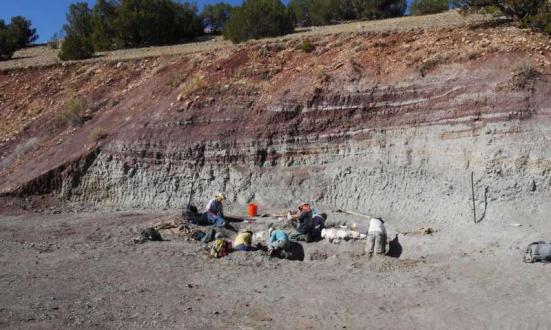 Crews escavação de fósseis de vertebrados da Pedreira Hayden em Ghost Ranch, NM. Estas rochas contêm fósseis abundantes de pólen, carvão vegetal, peixes, répteis e, todos os quais foram usados para reconstruir o ecossistema e do ambiente desta zona 212 milhões anos atrás. Crédito: Randall Irmis