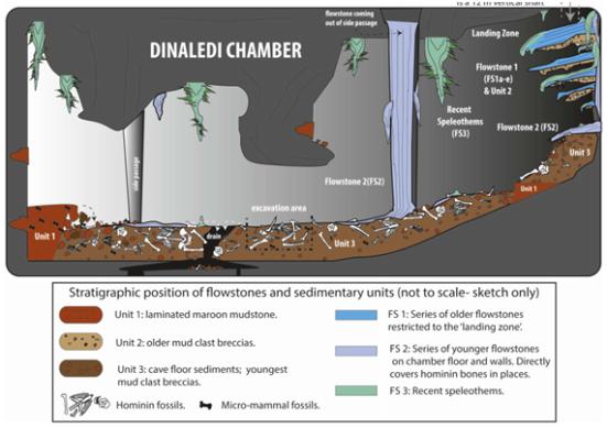 Ilustração com a distribuição de fósseis, sedimentos, escorrimentos geológicos e tafonômica no interior da Câmara Dinaledi. A distribuição das diferentes unidades geológicas e escorrimentos são mostradas em conjunto com a distribuição de material fóssil.