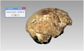 Constatação do volume cerebral de Homo naledi