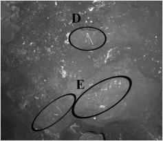 """Ossos de aves e vários fragmentos de ossos longos que foram """"arranjados"""" em rochas por um desconhecido antes da descoberta da equipe de espeleologia. Cerca de 80 cm."""